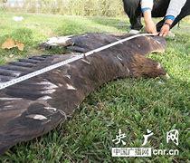 沙雅县新闻网 的图像结果