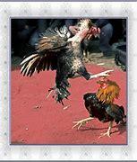 斗鸡 的图像结果