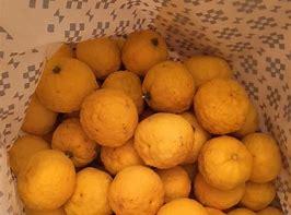 柚子 的图像结果
