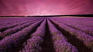Wallpaper, Lavender, Field, Sky, Mountain, Provence, France, Europe, 5k, Nature, 16531