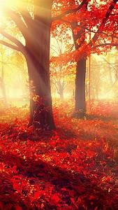 Wallpaper, Park, 5k, 4k, Wallpaper, Autumn, Beautiful, Leaves, Trees, Nature, 12401
