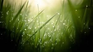 Wallpaper, Grass, 4k, Hd, Wallpaper, Green, Drops, Dew, Sun, Rays, Nature, 3896