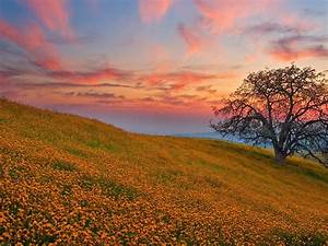 30, Spring, Backgrounds, Wallpapers, Images, Pictures