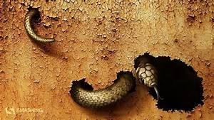 Dangerous, Snake, Wallpapers