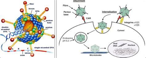 四种病毒系统介绍 - 丁香园